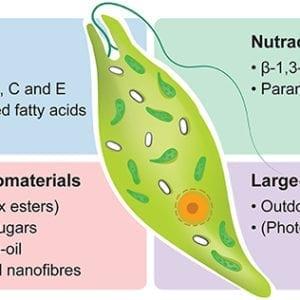 Microalgae Fluid (Euglena Gracilis) 20L