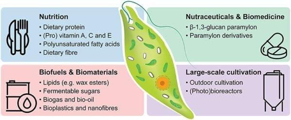 微藻液(裸藻 Euglena Gracilis)20升